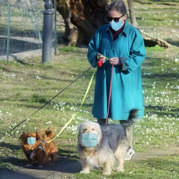 Woman wearing a coat and mask outside walking three dogs, all wearing masks