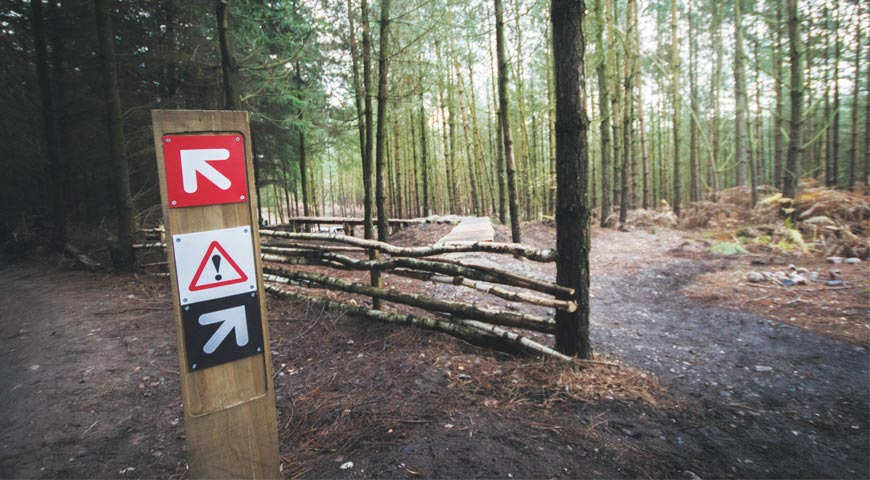 Signs pointing various ways in forest