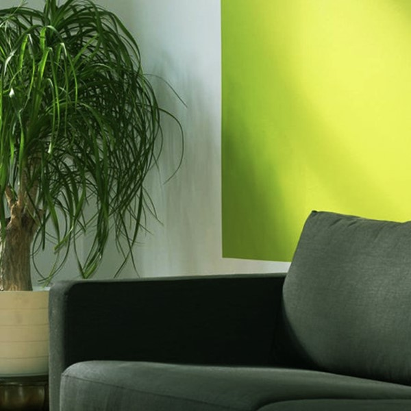 Green wall, plant and couch