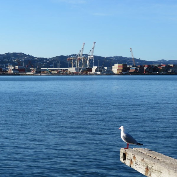 View of Wellington ports from the harbour