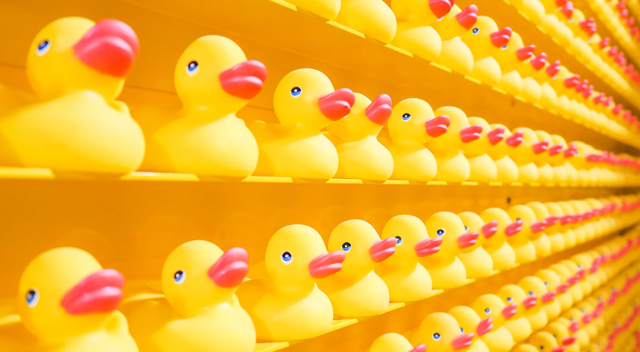 Rubber ducks lined up on shelves on the wall