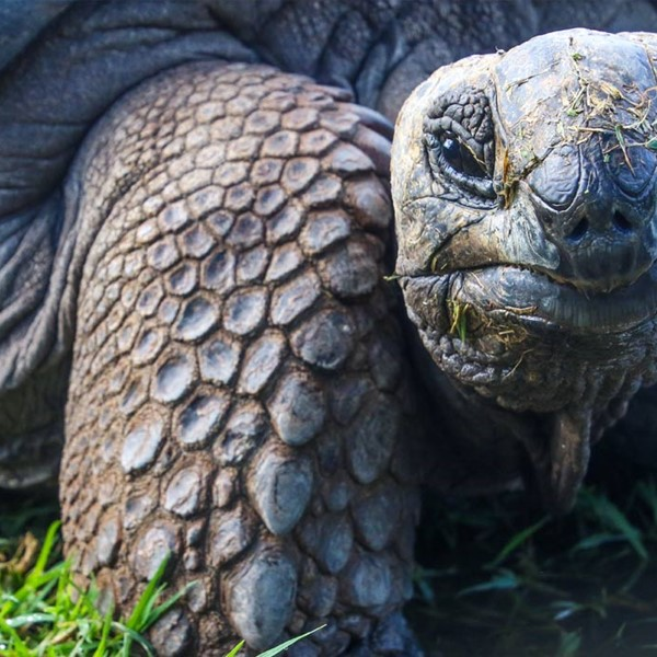 Close up of Tortoise lying on grass